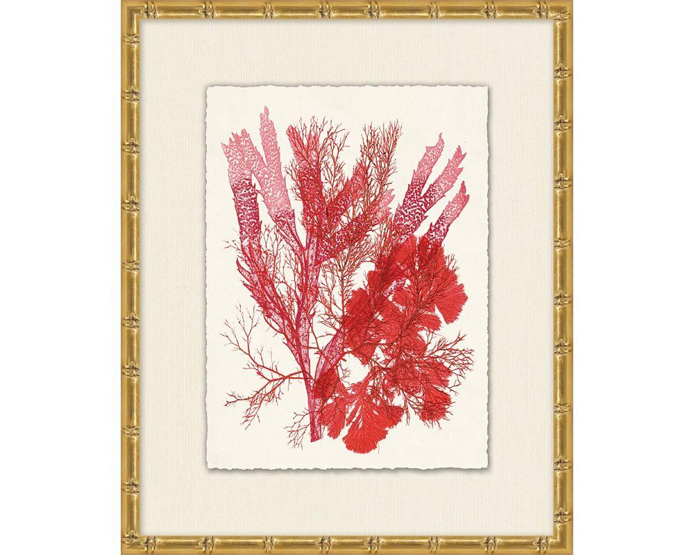 Azure Ocean Herbarium 1
