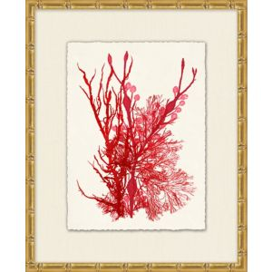 Azure Ocean Herbarium 3