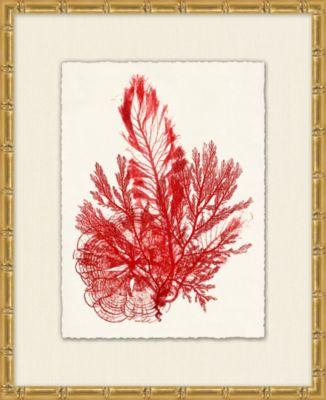 Azure Ocean Herbarium 4