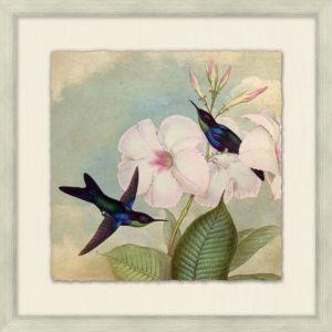 Humming Bird Garden 1