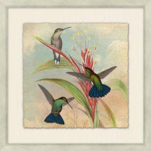 Humming Bird Garden 3