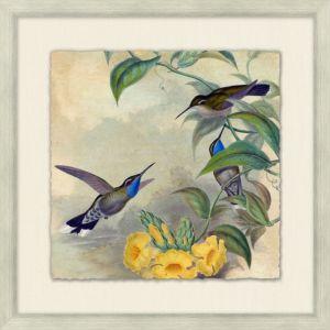 Humming Bird Garden 4