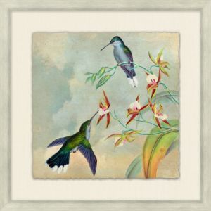 Humming Bird Garden 5