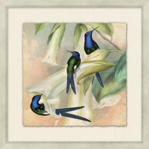 Humming Bird Garden 6