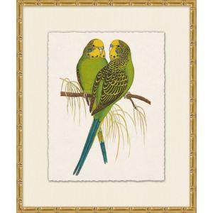 Tropical Parrot 1