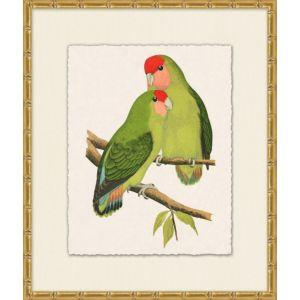Tropical Parrot 3