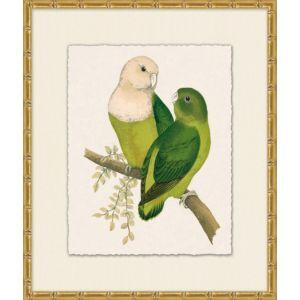 Tropical Parrot 4