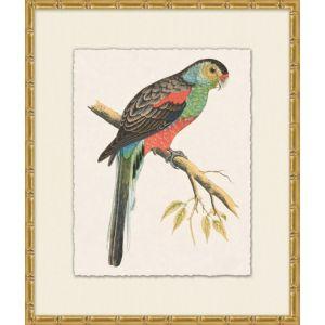 Tropical Parrot 5