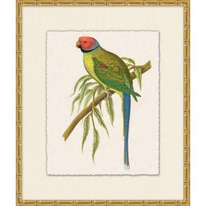 Tropical Parrot 6