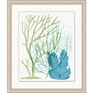 Deep Sea Kelp 3