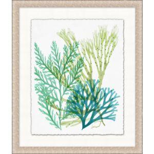 Deep Sea Kelp 5