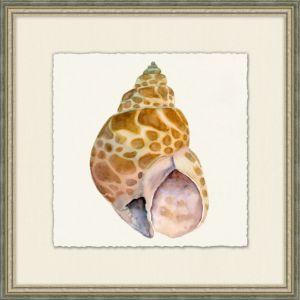 Natural History Shell 1