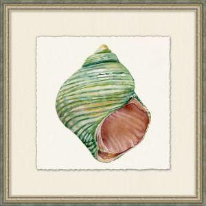 Natural History Shell 2