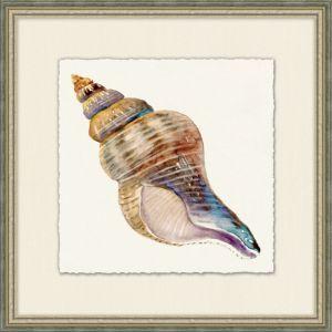 Natural History Shell 3